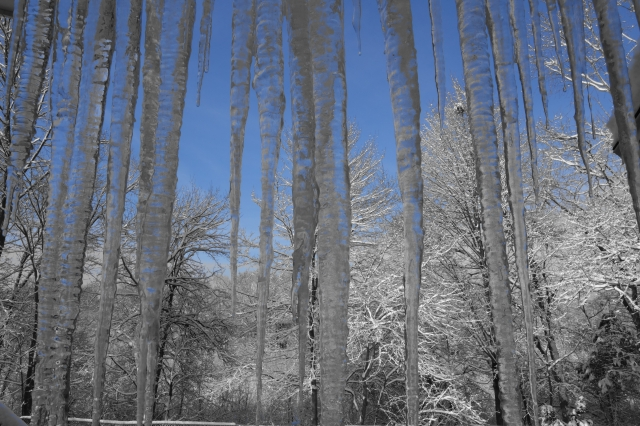 Icicle Forest, February 2014