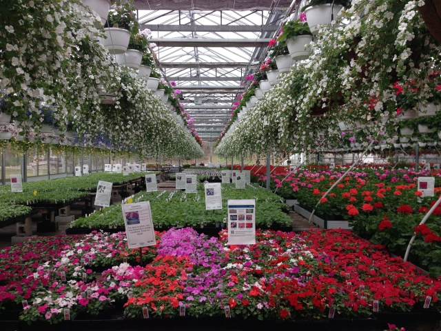 Volante Farms Greenhouse